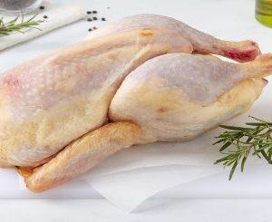 gallina fattoria togni
