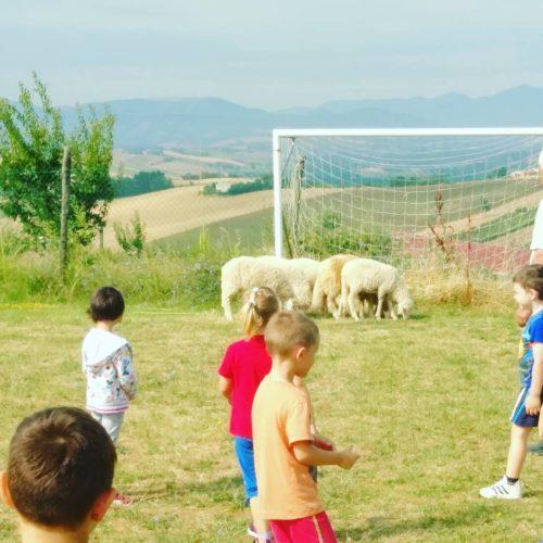 fattoria didattica ancona